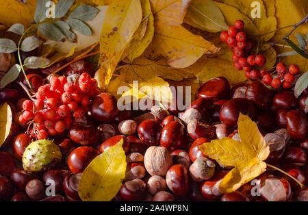 Hintergrund aus Herbst gelbe Blätter von Sycamore Arten, Ahorn, Kastanien, Eicheln und vogelbeere - Stockfoto