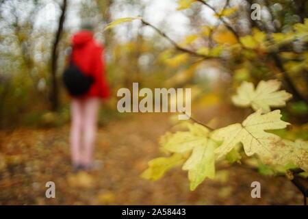 Reisen Sie durch den Wald. Silhouette eines Mädchens mit Rucksack zu Fuß auf einem Pfad mit braunen Blättern. - Stockfoto