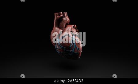 Anatomie der menschlichen Herzen isoliert auf schwarz, 3D-Rendering. - Stockfoto