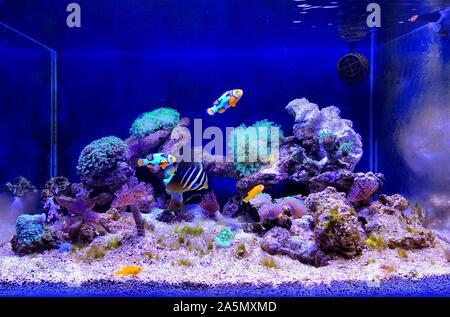 Coral Reef Aquarium Tank Szene - Stockfoto