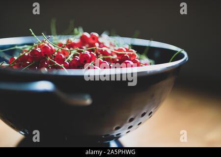 Rote Johannisbeeren in einem blauen Sieb auf einem Holztisch. Rote Johannisbeere Beeren reif. Nähe zu sehen. - Stockfoto