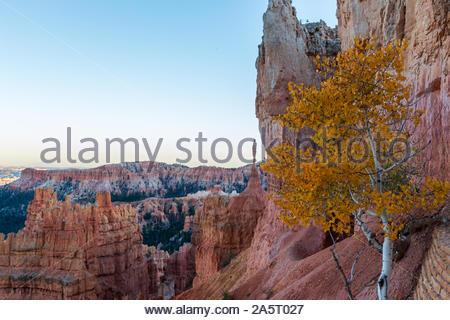 Gelben Blätter im Herbst im Bryce Canyon National Park im Südwesten von Utah, USA. Eine Sammlung von riesige natürliche Amphitheater - Stockfoto