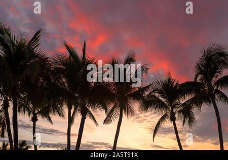 Schöne rosa Sonnenaufgang über Coco Palms in Miami Beach, Florida. - Stockfoto