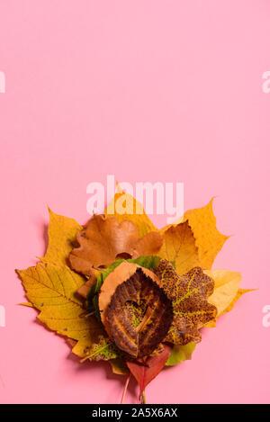 Bunte verwelkte Blätter. Mit dem Herzen Form schneiden Sie in der Mitte auf rosa Hintergrund. Studio schießen. Blick von oben. Vertikale Ausrichtung. Kopieren spa - Stockfoto