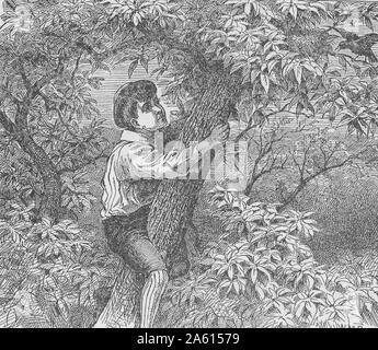 Gravur, wahrscheinlich aus einem alten Buch, mit der Darstellung eines jungen Jungen, mit viktorianischen Shorts, Hut, Strümpfe und Hemd, klettern auf den Stamm eines grünen Baumes, mit einem Vogel, der ihn von einem Zweig oben rechts, 1900 anschreit. () - Stockfoto