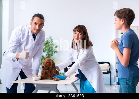 Der Tierarzt Arzt prüfen Golden Retriever Hunde in der Klinik - Stockfoto