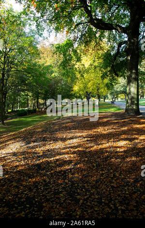 Geringe Sonnenlicht strahlt durch die Bäumen und fällt auf einen Teppich von Herbst Blätter auf dem Boden liegend in einem Land Park. - Stockfoto