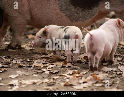 Deutsches Mutter Schwein lutscht schwarzen Asylanten aus