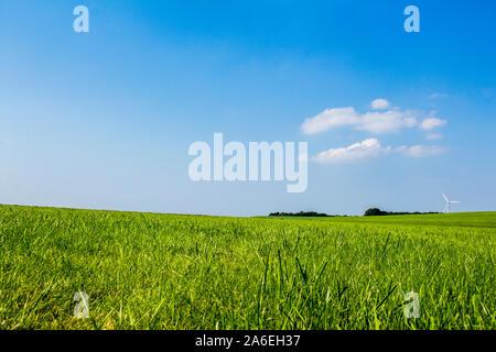Blauer Himmel, grünes Gras, Deich Landschaft im Norden von Deutschland. - Stockfoto