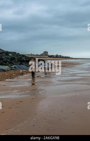 Eine Frau geht ihren Hund, Border Collie kreuz Labrador trägt ein rotes Halsband über den Strand laufen in Walton auf der Naze, Essex - Stockfoto