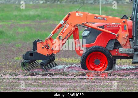 Cranberry Erntemaschine, Pitt Meadows, B.C., Kanada