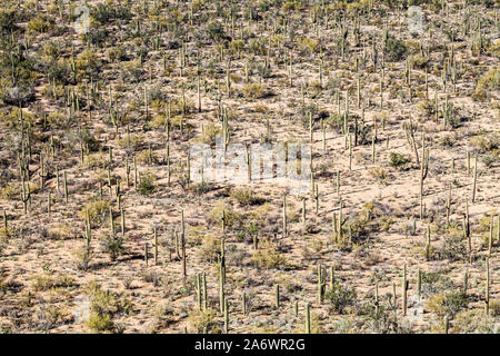 Eine wüste im Saguaro National Park, Arizona, USA. - Stockfoto