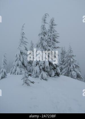 Ein kleines Wäldchen Berg Tannen stehend mit einer schweren Decke von frischen Schnee. In der Nähe der Gipfel von Ghost Kante in den Mt. Haube Wildnis.