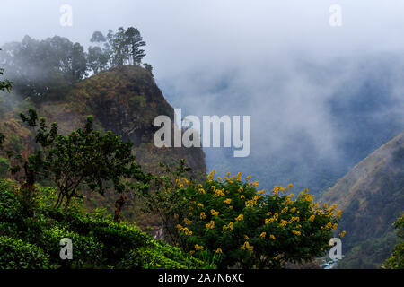 Auf einem felsigen Berg, die paar Bäume in der Kante. Im Vordergrund einige Bäume - Stockfoto