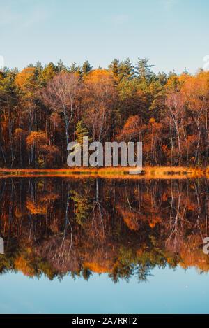 Wald im Herbst See fallen Bäume und bunte goldene Laub Reflexion im Wasser - Stockfoto