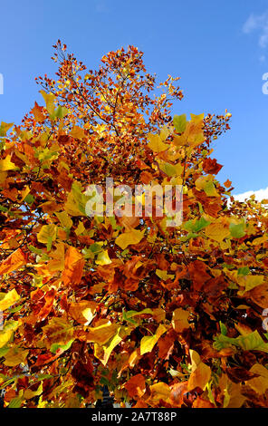 Bunte Blätter im Herbst auf blauen Himmel Hintergrund - Stockfoto