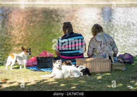 Bedford, Großbritannien, 28. Juli 2019. Paar und Hunde bei einem Picknick - Stockfoto