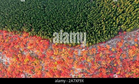 Jinan. 4 Nov, 2019. Luftaufnahme auf Nov. 4, 2019 zeigt die Landschaft des Xiezi Berg in Jinan, Provinz Shandong im Osten Chinas. Rauch Bäume und Pinien wachsen auf beiden Seiten der Kante hier präsentieren zwei Farben im Herbst Saison. Credit: Zhu Zheng/Xinhua/Alamy leben Nachrichten - Stockfoto