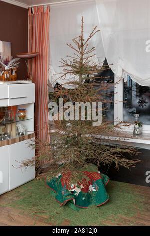 Weihnachten ist vorbei, die echten Weihnachtsbaum können die Zweige hängen. Die Nadeln befinden sich auf der Etage. Zeit für Neues. - Stockfoto
