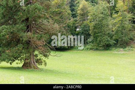 Jahrhunderte alte imposante Riesen Baum, auf einer Wiese, mit anderen Bäumen im Hintergrund und ein Haus unter ihnen - Stockfoto