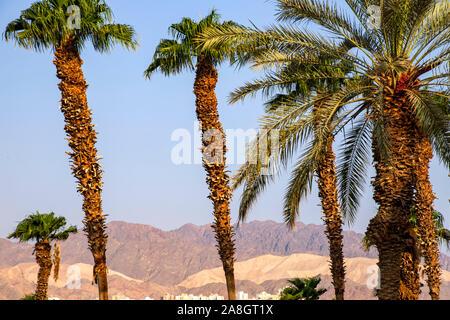 Seitliche Sicht auf die bunten Berge von Eilat obwohl Palmen. Israel - Stockfoto