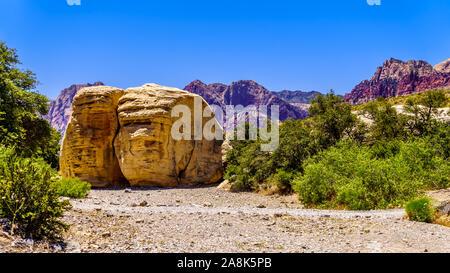 Riesigen gelben Sandsteinfelsen im Sandsteinbruch Trail im Red Rock Canyon National Conservation Area in der Nähe von Las Vegas, Nevada, United States - Stockfoto