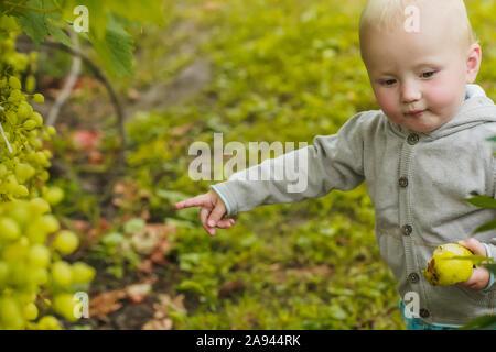Kleines Mädchen Punkte Trauben wachsen auf Bush. Kind isst frische Früchte und Beeren aus dem Garten. Die ökologische Landwirtschaft, der Anbau von natürlichen Produkten. Harve - Stockfoto