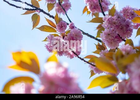 Bunte Frühlingsblumen und Brunches auf Morgen Sonnenlicht gegen den blauen Himmel und grüne Gräser in den Wald. - Stockfoto