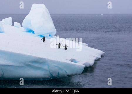 Gruppe der Kinnriemen Pinguine auf Eisberg in der Antarktis zum Meer gehen auf krill zu füttern, Konzept über Wildlife Preservation und globale Erwärmung, Antarc - Stockfoto