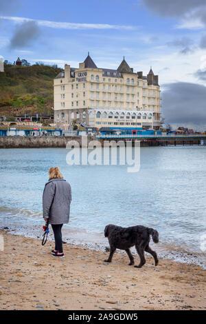 Reife lady Walking ihren schwarzen Labradoodle Hund am Strand von Llandudno mit Blick auf das Grand Hotel - Stockfoto