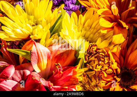 Ein Strauß Blumen riecht und sieht unglaublich. - Stockfoto
