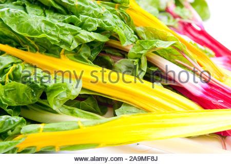 Organische Mangold in Gelb, Rosa Rot und Grün - Stockfoto