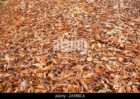 Mardley Heide Woodlands in Hertfordshire, Vereinigtes Königreich - Stockfoto