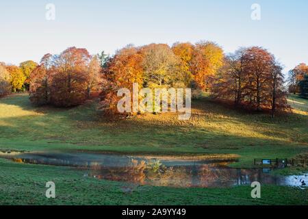 Fagus sylvatica. Herbst Buche und Hochwasser Reflexionen im frühen Herbst Sonnenlicht. Blenheim Park, Oxfordshire, England - Stockfoto