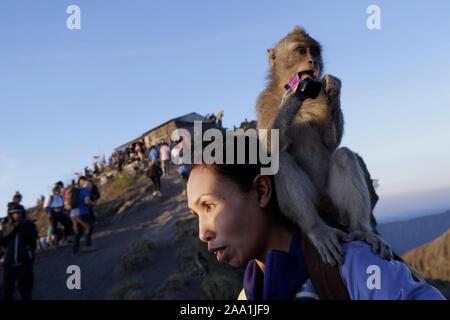 Bali, Indonesien. Okt, 2019 18. Ein Affe ist Essen ein Paket von Süßigkeiten auf dem Rücken der Wanderer auf dem Gipfel des Mount Batur in Bali während der Sunrise. Jeden Tag hunderte von Menschen klettern Mount Batur, um den Sonnenaufgang zu beobachten. Mount Batur ist ein aktiver Vulkan auf der Insel Bali in Indonesien und in seinem letzten Ausbruch entfernt wurde im Jahr 2000 verzeichnet und der höchste Gipfel liegt auf 1717 Meter (5.633 ft) über dem Meeresspiegel, wo Menschen Atem haben Sie Blick auf den Lake Batur, Mount Abang und Mount Agung. Wenn das Wetter es erlaubt, ist es möglich, siehe Mount Rinjani, ein aktiver Vulkan auf der benachbarten - Stockfoto