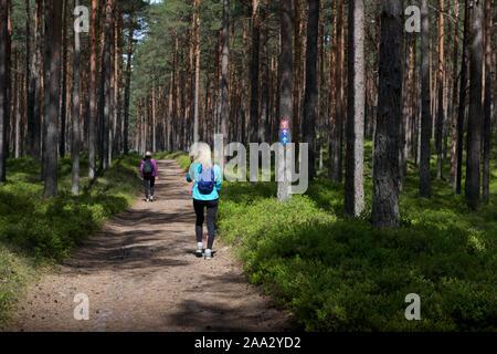 Mann und Frau wandern im Wald, Liepoja, Lettland - Stockfoto