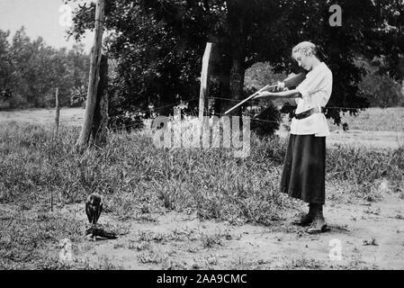 Eine kleine Schleiereule im Fadenkreuz einer Schrotflinte scheint auf geborgter Zeit, Ca. 1915. - Stockfoto