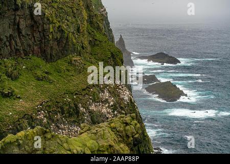 Möwen nisten zwischen über Felsen auf den Klippen in Mykines, Färöer Inseln - Stockfoto