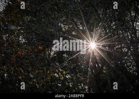 Feder Zweige von Bäumen. Die Blätter beginnen zu wachsen. Saubere Waldluft. - Stockfoto