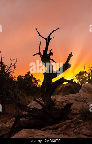Canyonlands National Park, Utah, USA. Atemberaubende Schluchten, Tafelberge und Kuppen, die von den Colorado, Grün und trbutary Flüsse erodiert - Stockfoto