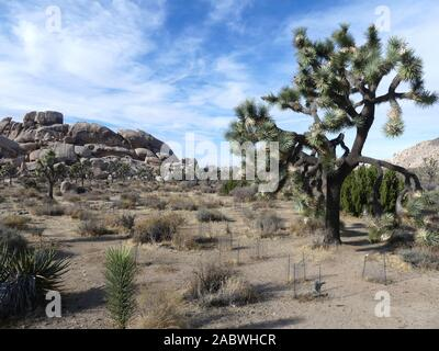 JOSHUA TREE NATIONAL PARK, Kalifornien. Foto: Tony Gale - Stockfoto
