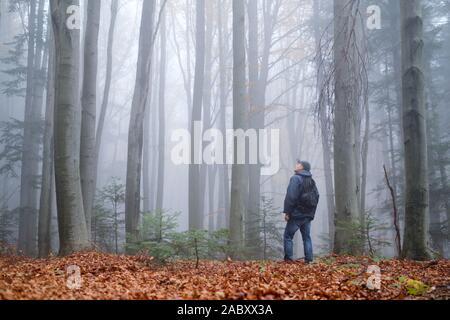 Mann in die mysteriöse dunkle Buchenwälder im Nebel. Herbst morgen in den nebligen Wäldern. Magische neblige Atmosphäre. Landschaftsfotografie