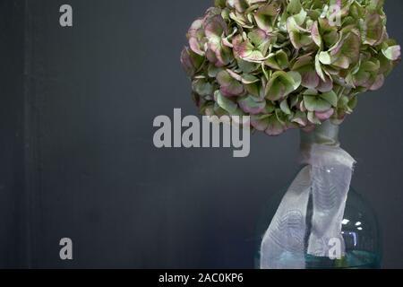 Foto eines riesigen hortensien in einer Glasflasche mit einem beigen Band auf einem dunklen Hintergrund, selektiver Fokus - Stockfoto