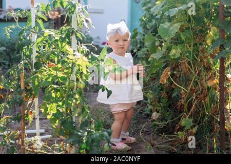 Wenig kleinkind Mädchen sammelt Getreide der Gurken im Gewächshaus im Sommer. Vergilbte verwelkte Blätter von Gurken. letzte Ernte von frischem Gemüse Betten - Stockfoto