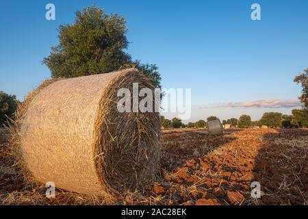 Landschaft von Apulien, Italien - Stockfoto