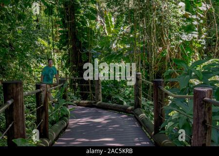 Ein Tourist folgt der Promenade durch den Regenwald auf Hawaii Tropical Botanical Garden, Papa' ikou, Big Island von Hawaii. - Stockfoto