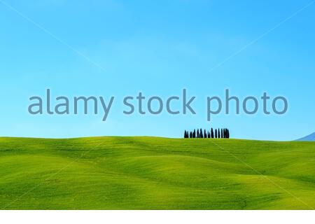 Zypressen und Toskanische Landschaft im Val d'Orcia, San Quirico d'Orcia, Toskana, Italien, Europa.