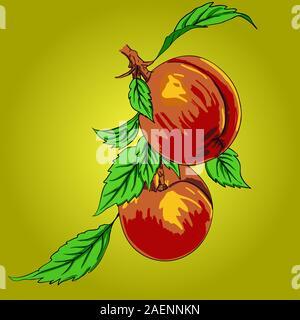 Zwei Pfirsiche mit Blättern auf einem Ast auf hellem Hintergrund - Stockfoto