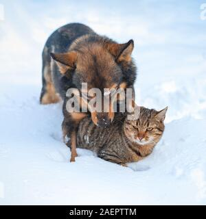 Hund und Katze sind die besten Freunde. Katze und Hund zusammen spielen im Freien auf dem Schnee im Winter. Der Hund umarmt die Katze - Stockfoto