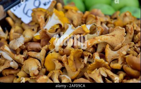 Frische Pilze zu verkaufen im Markt - Stockfoto